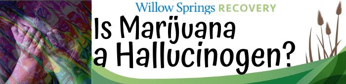marijuana as a hallucinogen